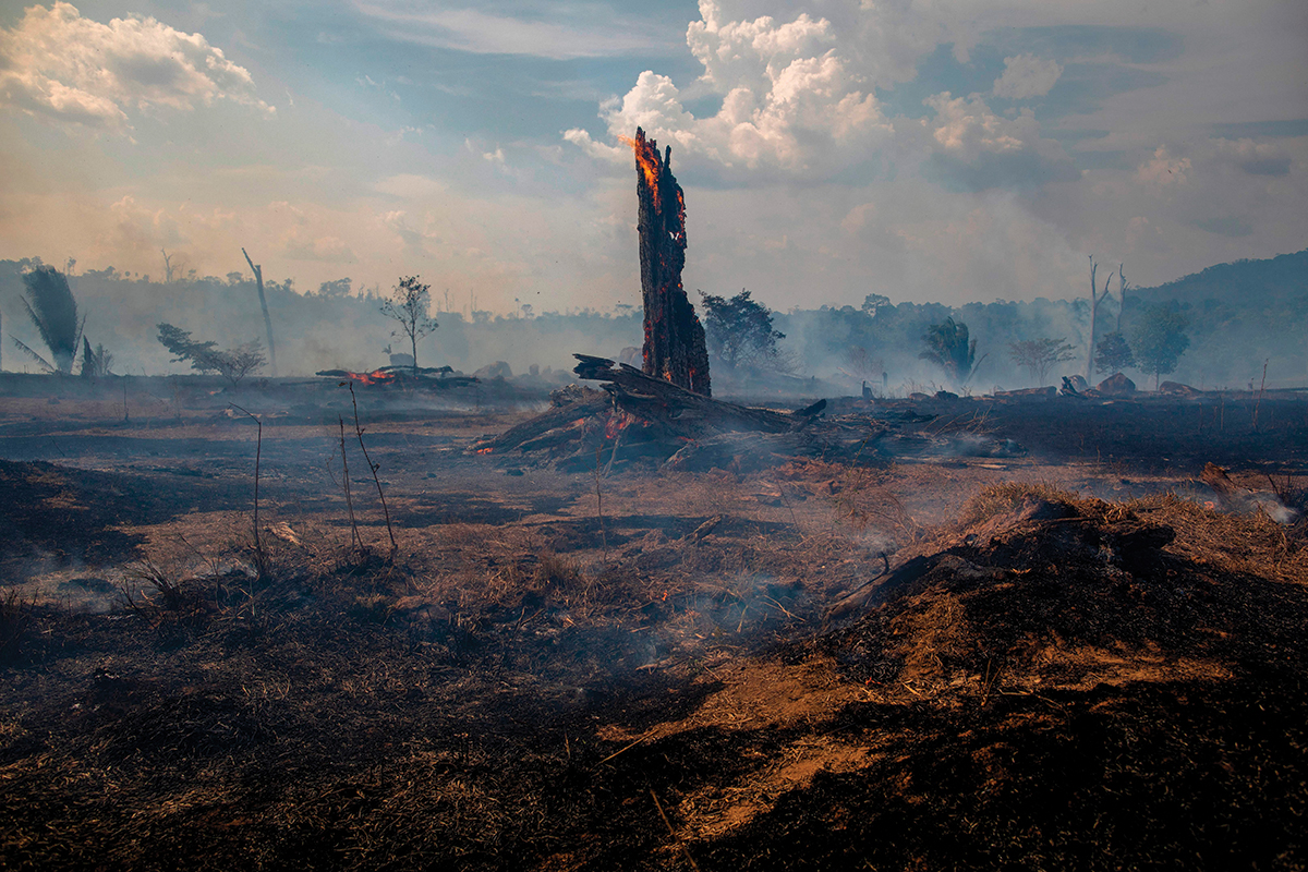 View of a burnt area of forest in Altamira, Para state, Brazil, oin the Amazon basin, on August 27, 2019. ©Getty Images